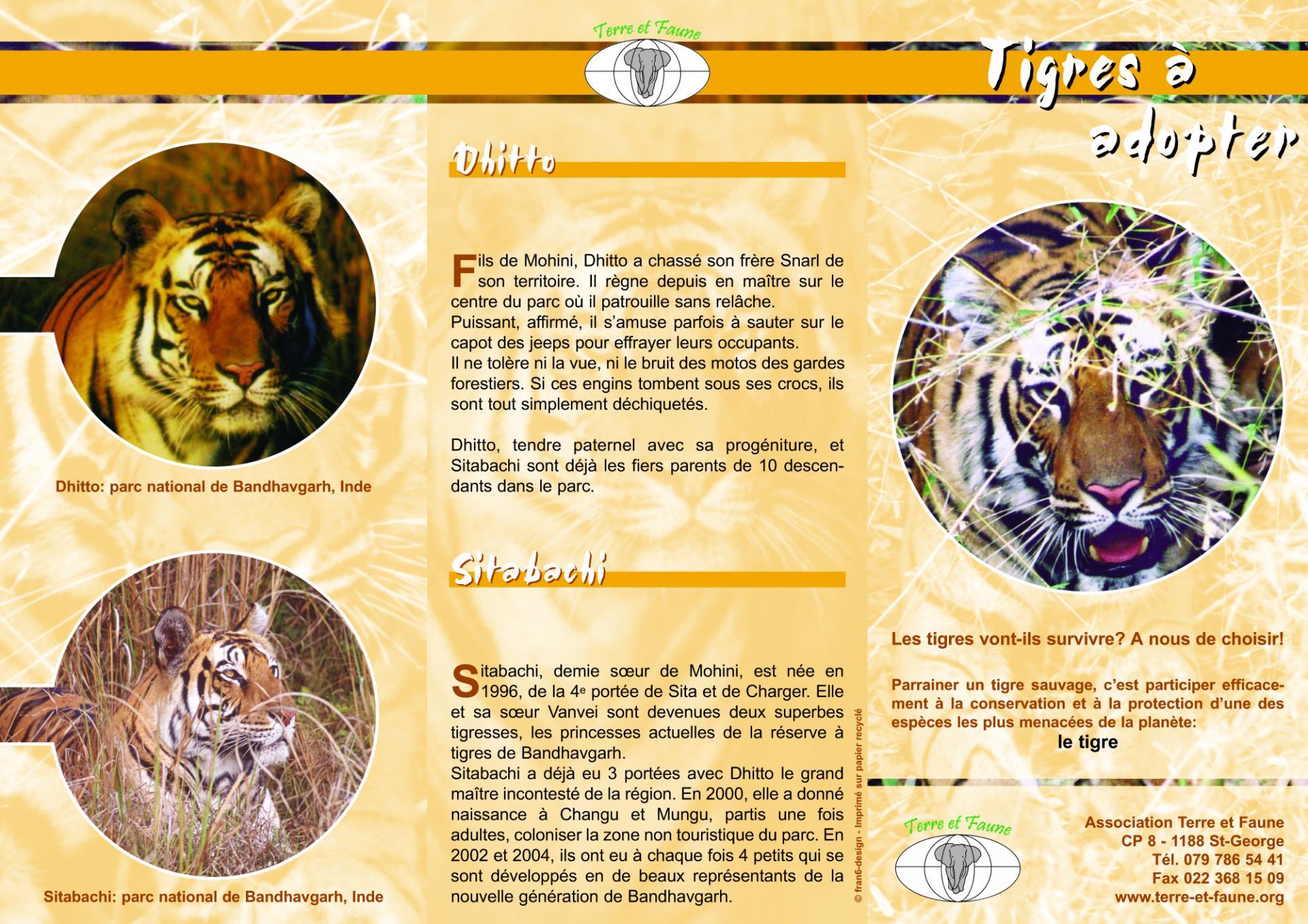 Dépliant Tigres