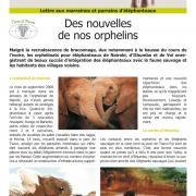 Journal des éléphanteaux 11