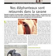 Journal des éléphanteaux 08