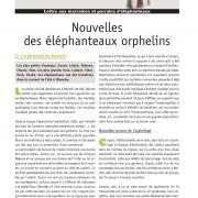 Journal des éléphanteaux 06