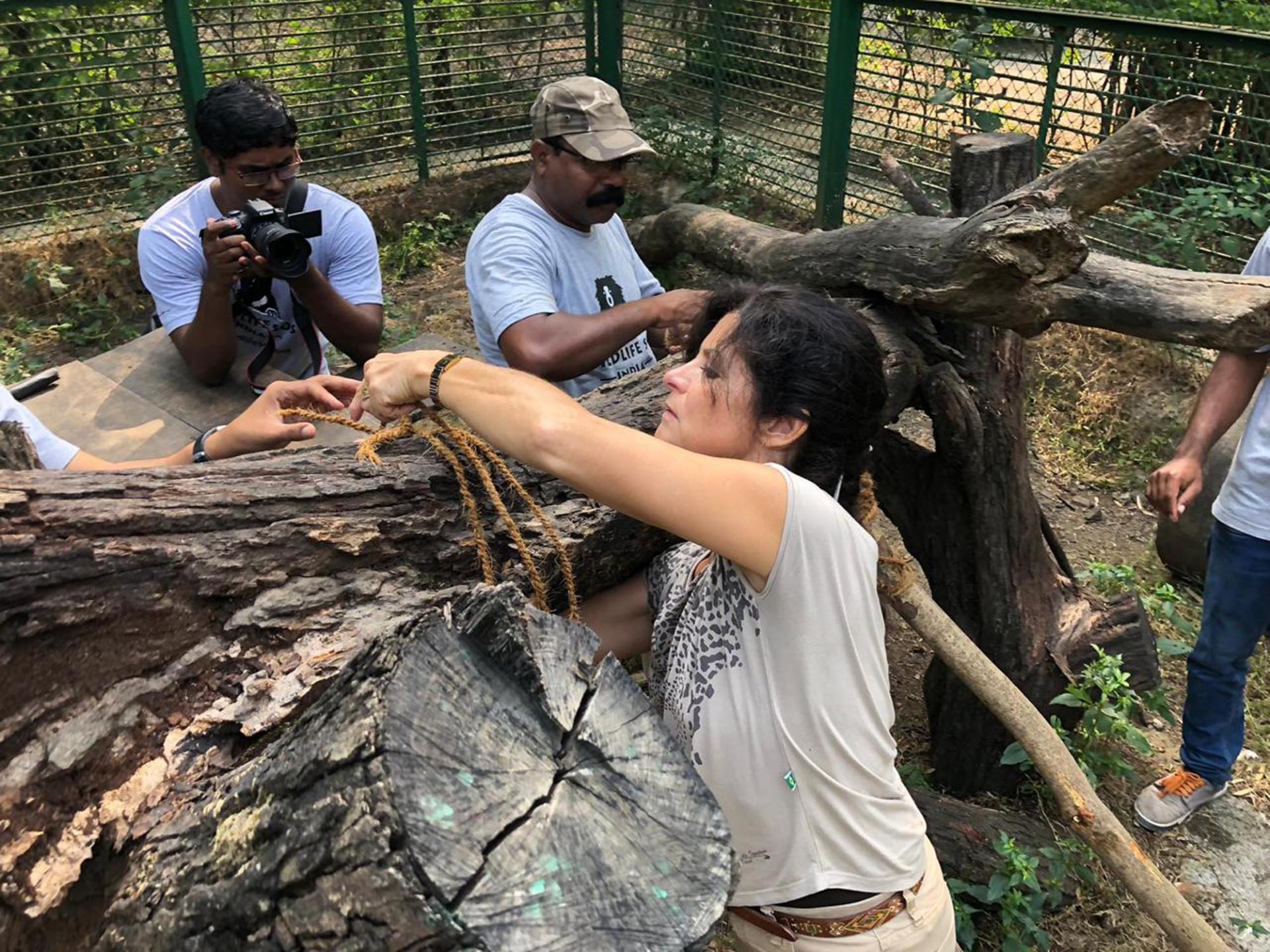 Enrichissement de l'enclos de Shivani