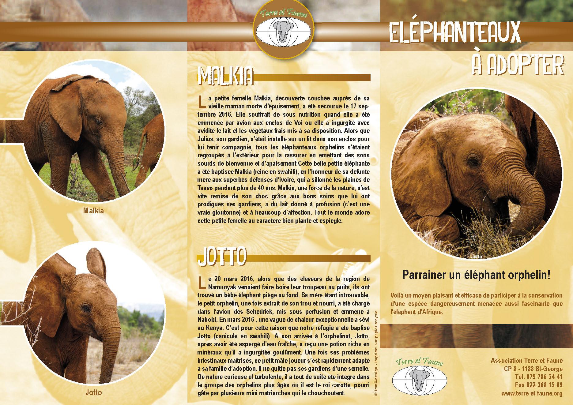 Dépliant éléphanteaux 2017