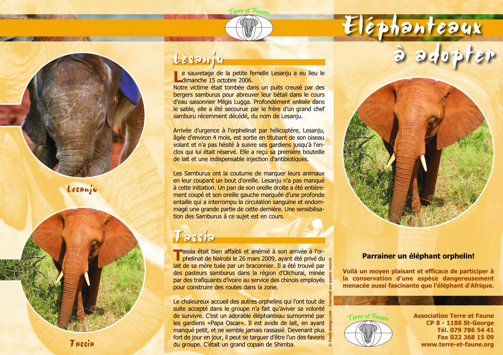 Depliant elephanteaux